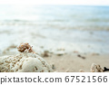 Small and cute on a coral found in the sea of Okinawa 67521566