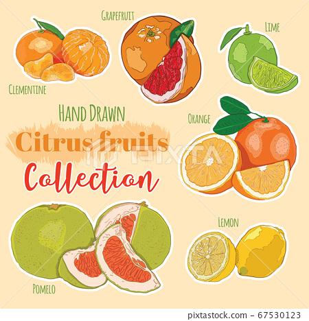 Hand Drawn Colorful Exotic Tropical Citrus Fruit Clementine Grapefruit Lime Orange Lemon Pomelo Collection Set 67530123