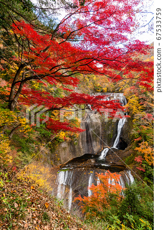 (이바라키 현) 袋田の滝 단풍 67533759