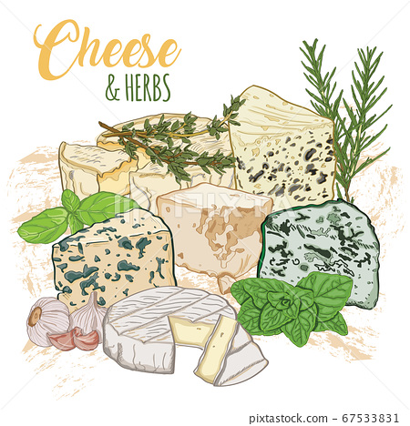 Hand drawn vector full color realistic types of cheese and culinary herbs 67533831