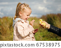 Little girl admires the little duckling held by mom's hand 67538975