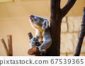 Koala of Higashiyama zoo 67539365
