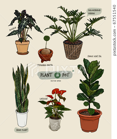Plant in pots, hand draw sketch vector. 67551540