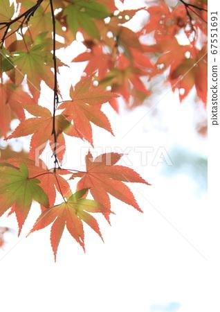 秋天和秋天的樹葉4 67551691