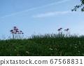 푸른 하늘과 피안 꽃 67568831