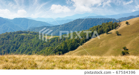 beech forest on the hills. wonderful landscape of 67584396