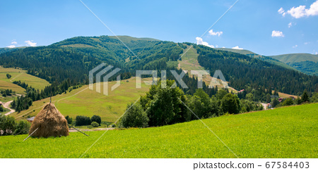 rural fields on a sunny summer day. trees on the 67584403