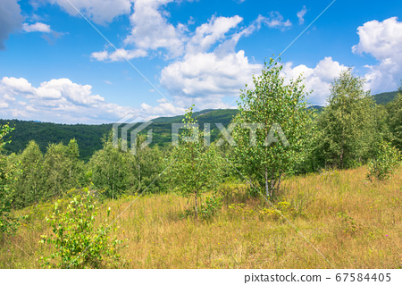 forest on the hillside meadow. beautiful 67584405