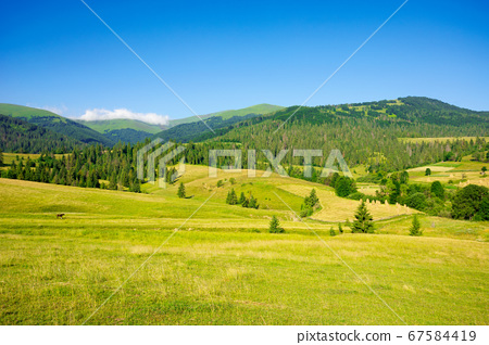 countryside landscape in summer time. trees on the 67584419