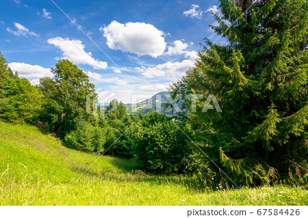 summer mountain landscape. trees on the green 67584426