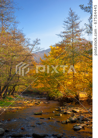 river in the forest. water stream among the 67584445