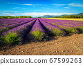 Agricultural place with purple lavender fields in Provence, Valensole, France  67599263