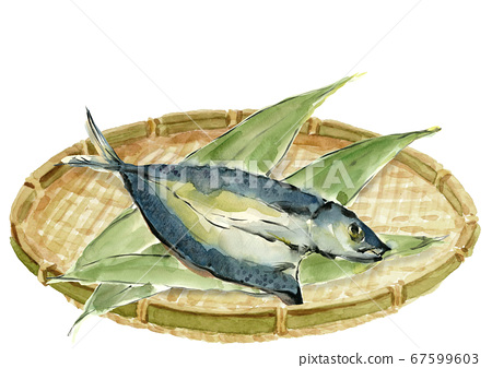 Bamboo and mackerel placed in a coland overnight dried fish [Watercolor] 67599603