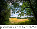 Meadow in a forest in rural surroundings 67609250