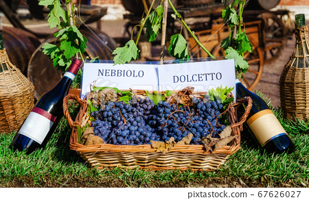 grapes and bottles of Nebbiolo and Dolcetto 67626027