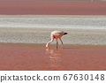 Red waters and flamingos at Colorada Lagoon - South of Bolivia. 67630148