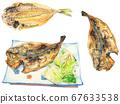 Watercolor horse mackerel illustration 67633538