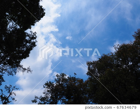 Looking up at the spring blue sky through the gaps between the trees 67634679