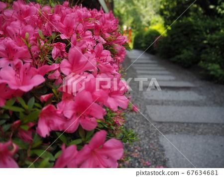 Kyoto Shinsenen, small path of azalea [May] 67634681