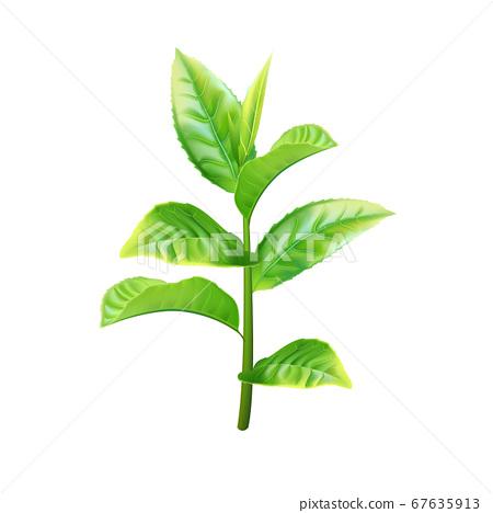 Realistic green tea branch. Vector illustration 67635913