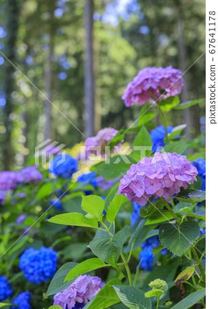 꽃 화원 국원 67641178