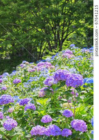 꽃 화원 국원 67641215