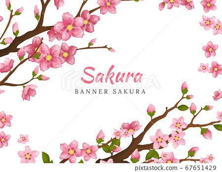Sakura. Greeting card banner or invitation card with blossom sakura flowers. Blooming flowers illustration wedding invitation template 67651429