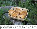 Chanterelle mushrooms in a basket 67652375