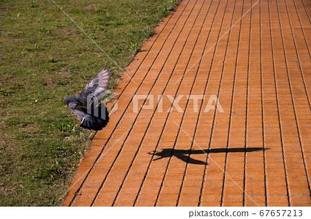 一隻鴿子降落的瞬間 67657213