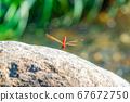 Red dragonfly perching Miyama Akane [Nagano Prefecture] 67672750