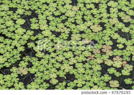 식물 67676285