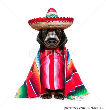 mexican dachshund with poncho 67680917