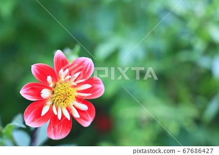 가든 뮤지엄 히에이 여름 꽃 67686427