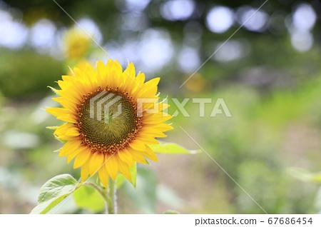 가든 뮤지엄 히에이 여름 꽃 67686454