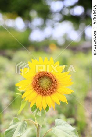 가든 뮤지엄 히에이 여름 꽃 67686456