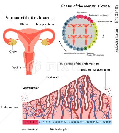 Changes in uterine endometrial destruction 67703485