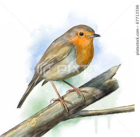 Grassland birds, robin 67713596