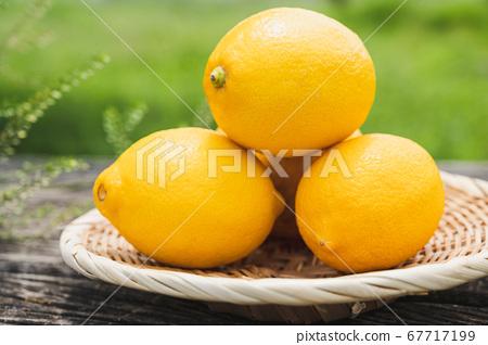 레몬 67717199