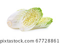 Fresh chinese cabbage on white background 67728861