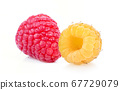 raspberries on white background full depth of 67729079