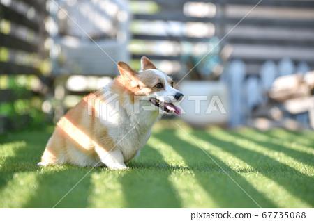 小狗在狗跑 67735088