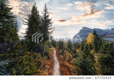 Autumn pine forest in rocky mountains at national 67735419