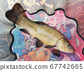 fish tench is caught by a fisherman and lies in the net 67742665