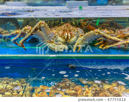 Alive king crab inside the tank at seafood market 67755818