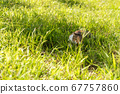 kitty on the grassland 67757860