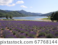 Lake, mountains and lavender fields 67768144