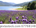 Beautiful Ichimen lavender fields, lakes and mountains 67768148