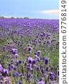 Beautiful Ichimen lavender field 67768149