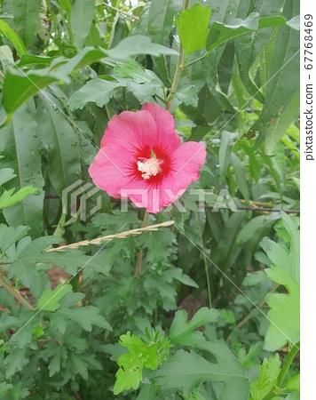 꽃 67768469