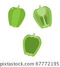 Simple vector illustration of bell pepper 67772195